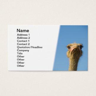 Strauß Visitenkarte