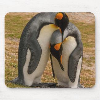 Streichelnde König-Pinguine, Falkland Mauspad
