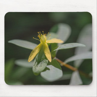 Stützende St AndrewsquerWildblume Mousepad