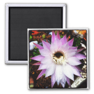 Succulent in der Blume Quadratischer Magnet