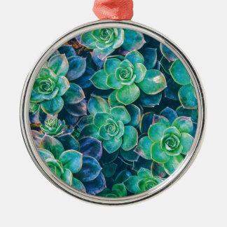 Succulents, Succulent, Kaktus, Kakteen, Grün, Rundes Silberfarbenes Ornament