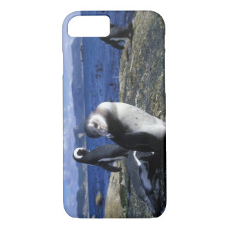 Südafrika, Simons Stadt, Esel-Pinguin iPhone 8/7 Hülle
