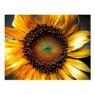 Sun-Blume Postkarte