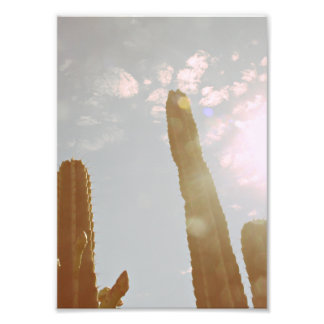 Sun und Kaktus Kunstfoto