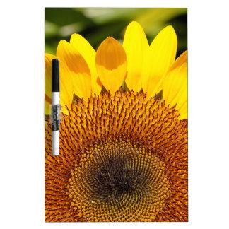 Sunflower.jpg Memoboard