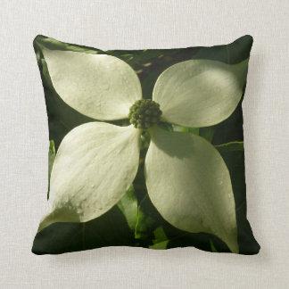 Sunlit Hartriegel-Blüten-weißer Frühling mit Kissen