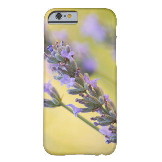 Süßer Lavendel Barely There iPhone 6 Hülle