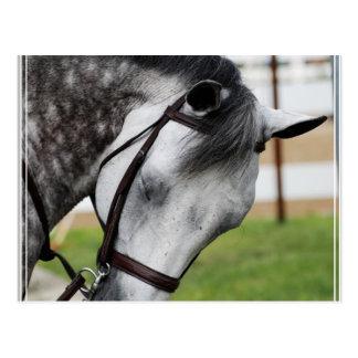 Süßes Appaloosa-Pferd Postkarte