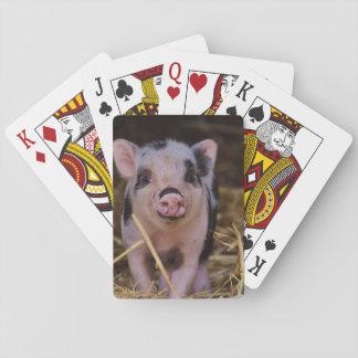 Süßes niedliches Schwein Spielkarten