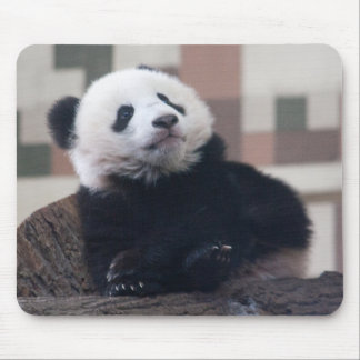 Süßes Panda-Baby Mousepad