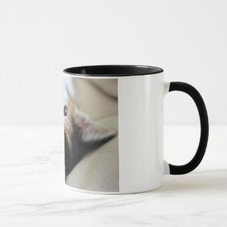 Süßestes Morgen-Kätzchen Tasse