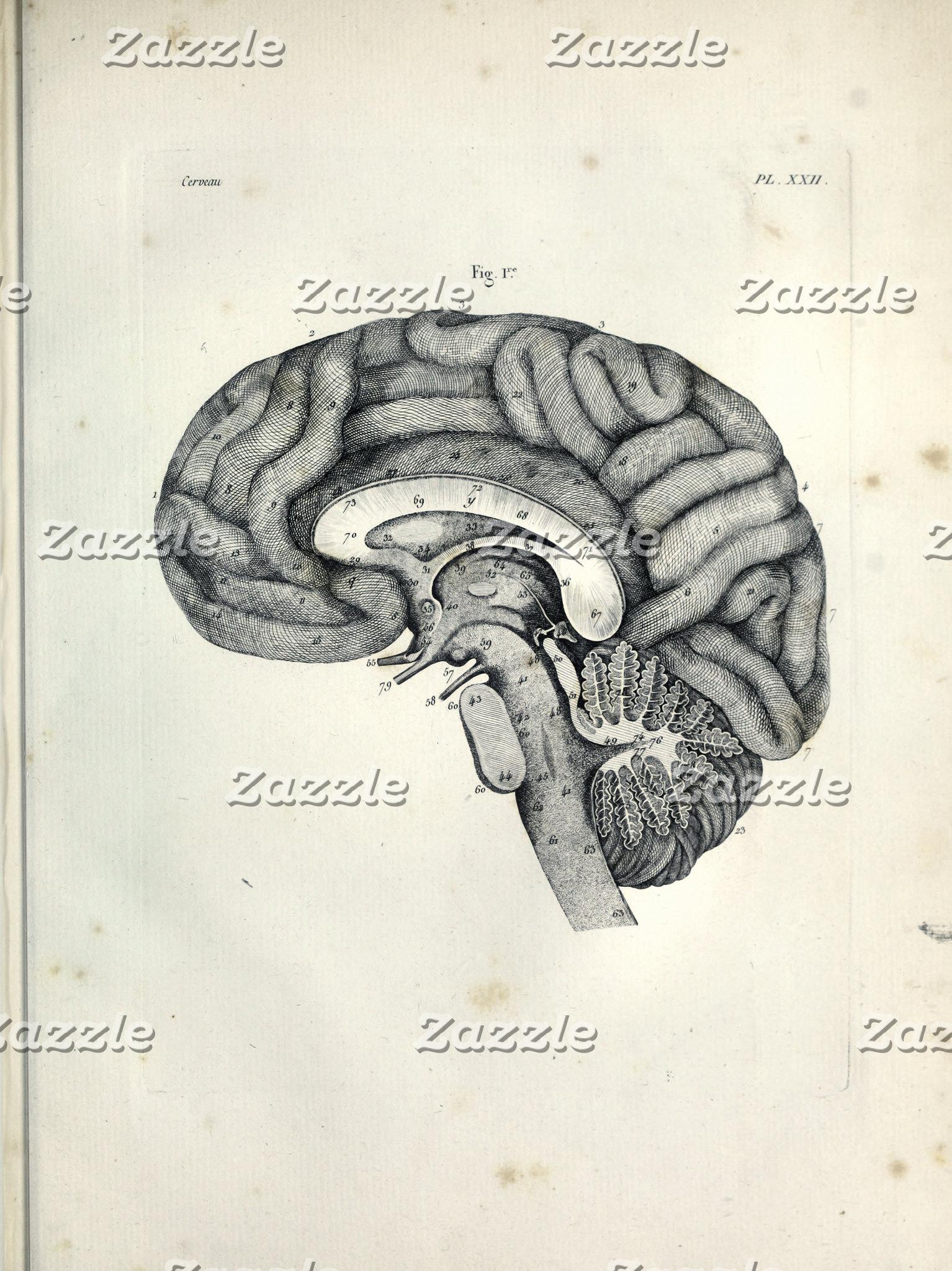 Anatomical Art