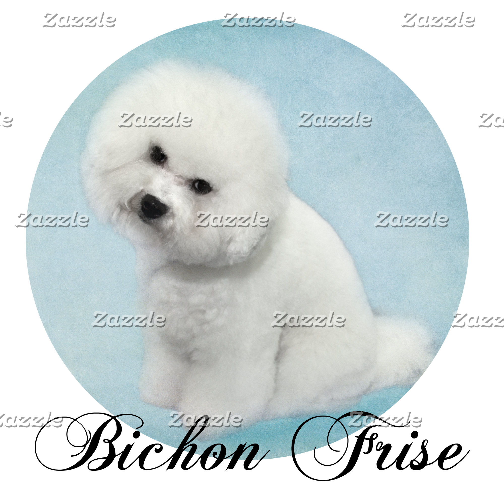 Bichon Frise
