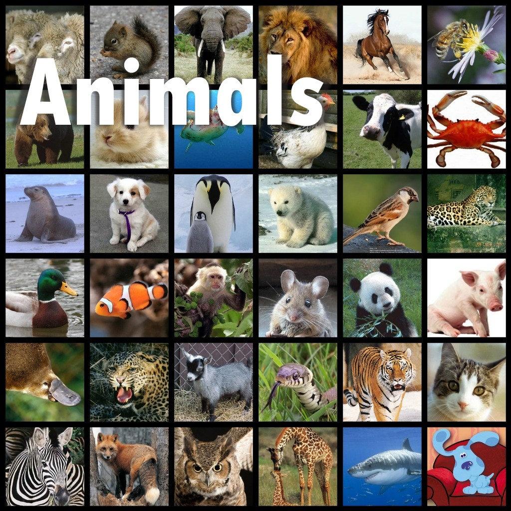 ANIMALS, Photography, Cartoons