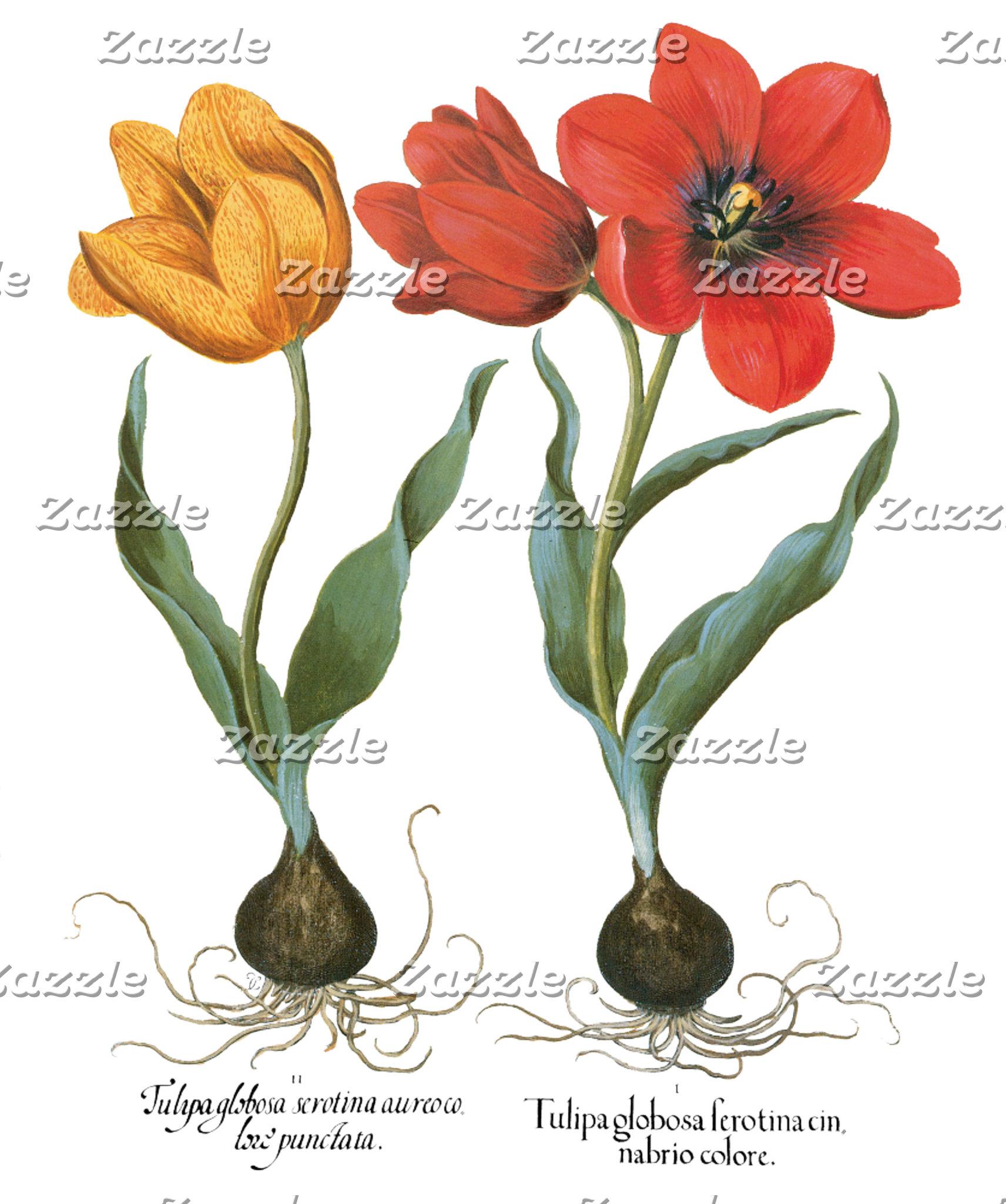 Botanical Art, Flowers and Garden Scenes