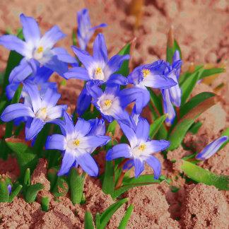 flower in oel painted