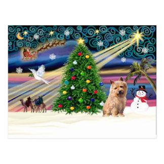 T2 Weihnachten Magie-Norfolk Postkarte