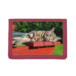 Tabby-Katzen-Geldbörse