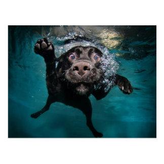 Tauchhund Postkarten