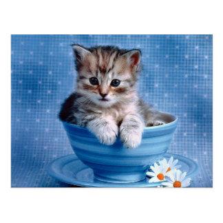 Teacup-Kätzchen Postkarten