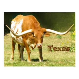 Texas Longhorn mit Tatsachen-Postkarte Postkarte