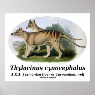 Thylacinus Cynocephalus (tasmanischer Tiger oder Poster