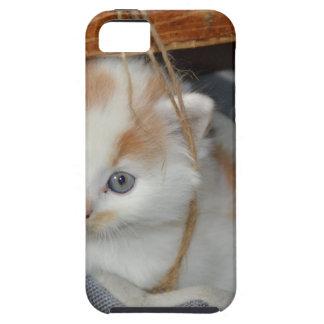 Tier-Pets niedlicher KätzchenKitty Katzen iPhone 5 Hüllen
