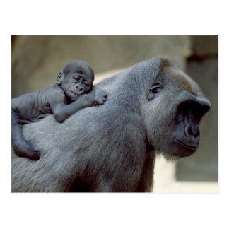 Tier-Set - Primate 3 Postkarte