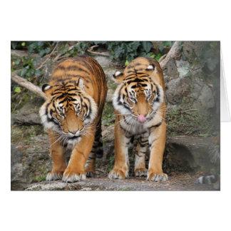 Tiger an Auckland-Zoo Karte