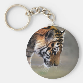 Tiger, der unten klettert schlüsselanhänger