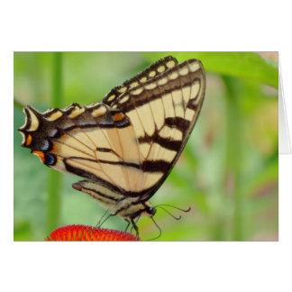 Tiger-Flügel - Schmetterling Karte