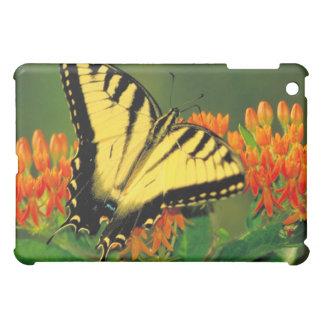 Tiger-Frack auf Schmetterlings-Unkraut iPad Mini Hüllen
