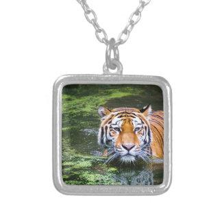 Tiger-Schwimmen Versilberte Kette