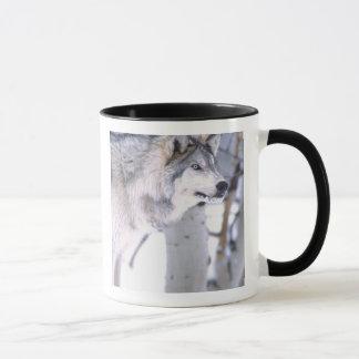 Timberwolf, Canis Lupus, Film Tierutah) Tasse