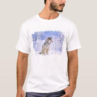 Timberwolf, der im Schnee sitzt, Canis Lupus, T-Shirt