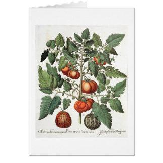 Tomaten und Melonen: amoris 1.Poma fructu luteo; 2 Karte