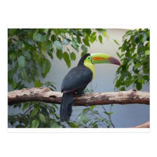 Toucan Foto Postkarten