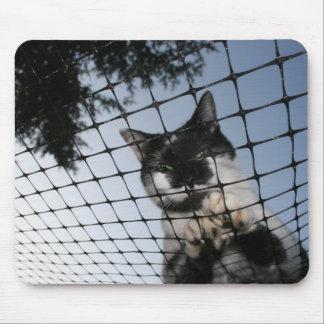 Tragen Sie die Katze am Sonnenuntergang Mousepad