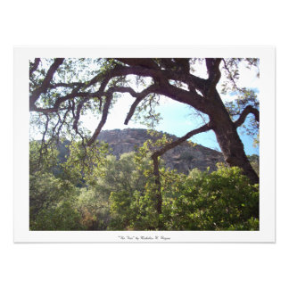 """""""Tree"""" See Berryessa Photo Drucke"""