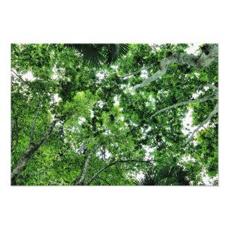 TREES FOTODRUCK
