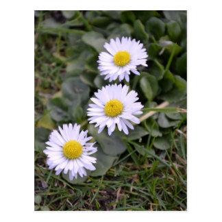 Trio der Blumen Postkarte