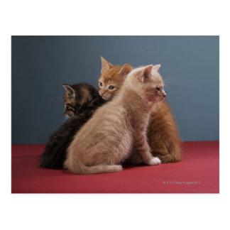 Trio der Kätzchen Postkarte