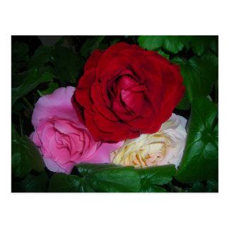 Trio der Rosen Postkarte