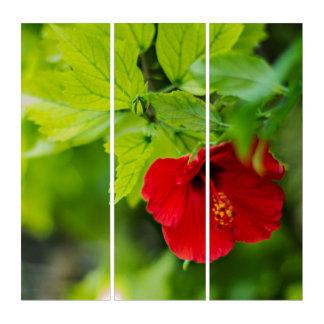 Tropische Blume roter Hibiskus-Hawaiis Triptychon