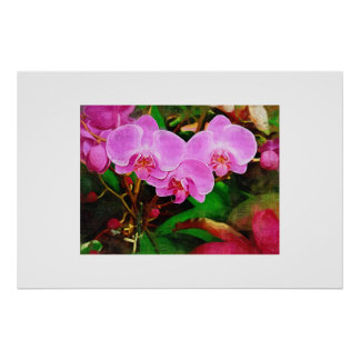 Tropische Orchidee - Nachmittag im Gewächshaus Poster