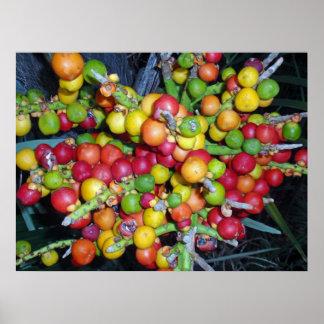 Tropische Palmen-Frucht Poster