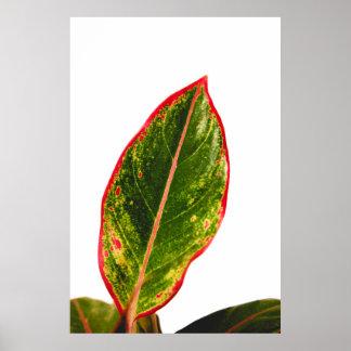 Tropische Pflanzerotes Poster