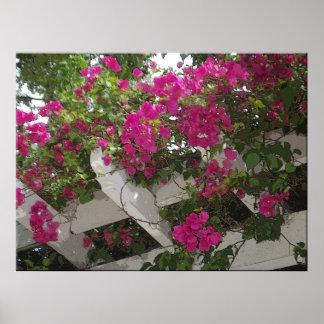 Tropisches Blumengitterplakat Poster
