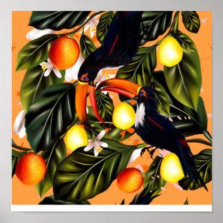 Tropisches Paradies. Toucans und Zitrusfrucht Poster