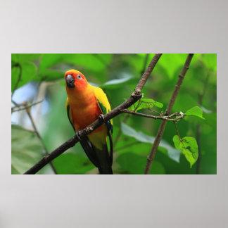 Tropisches Vogel-Plakat Poster